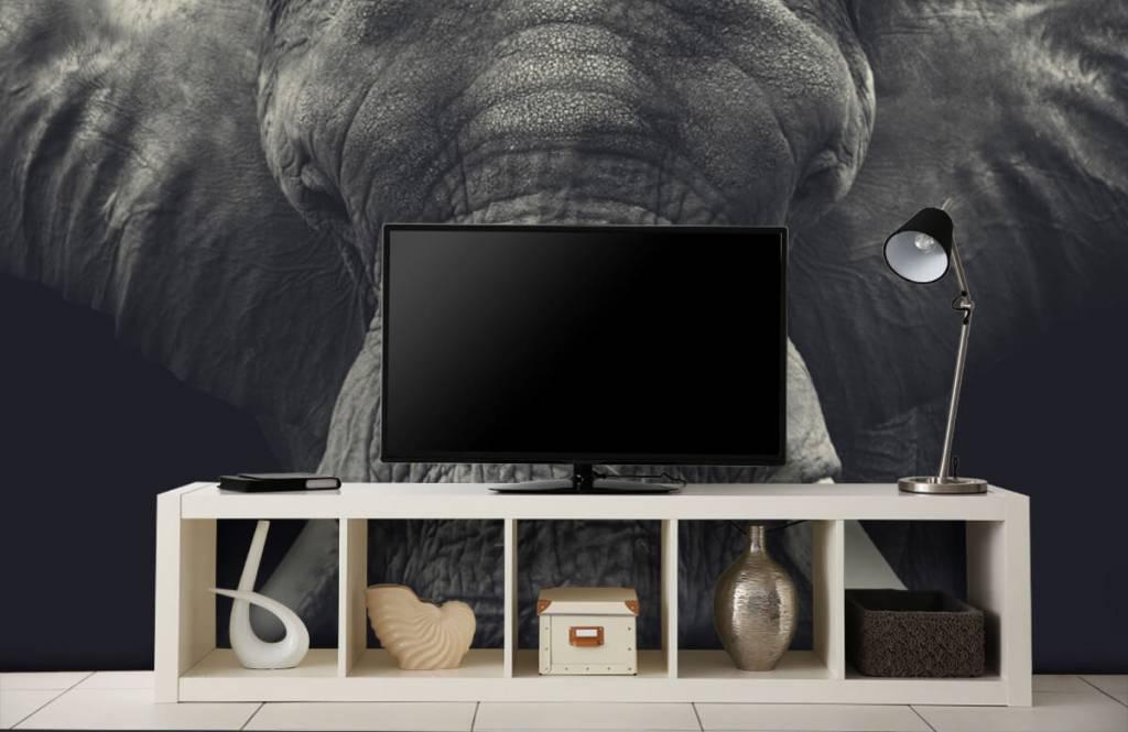 Elefanter Närbild av en elefant 4