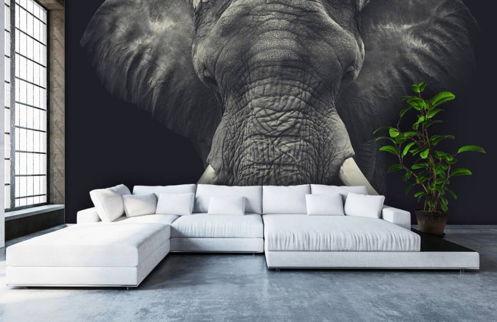 Elefanter Närbild av en elefant 5