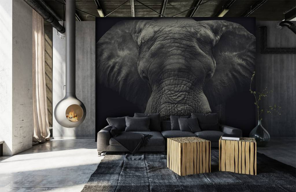 Elefanter Närbild av en elefant 6
