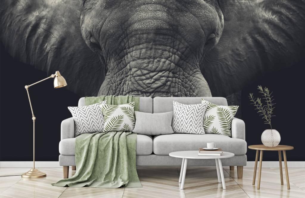 Elefanter Närbild av en elefant 7