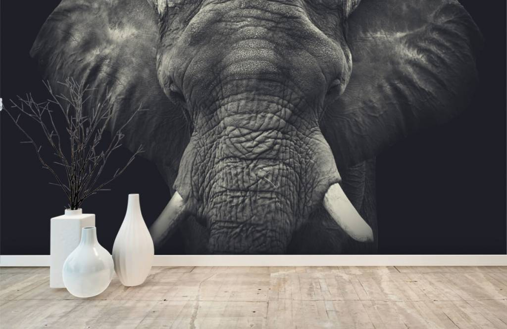 Elefanter Närbild av en elefant 8