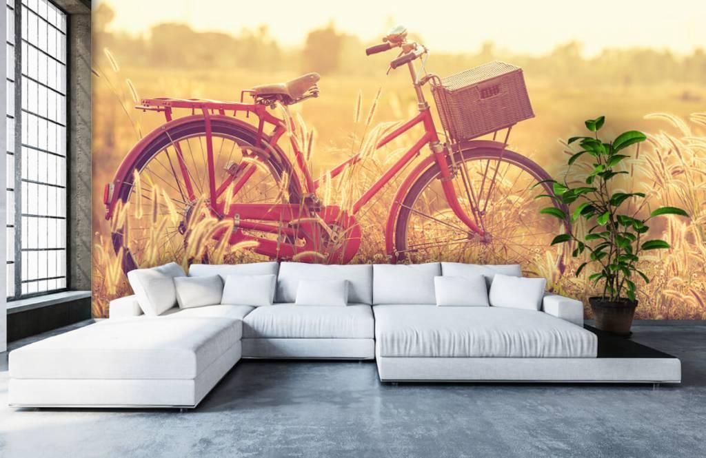 Landskap Vintage cykel 5