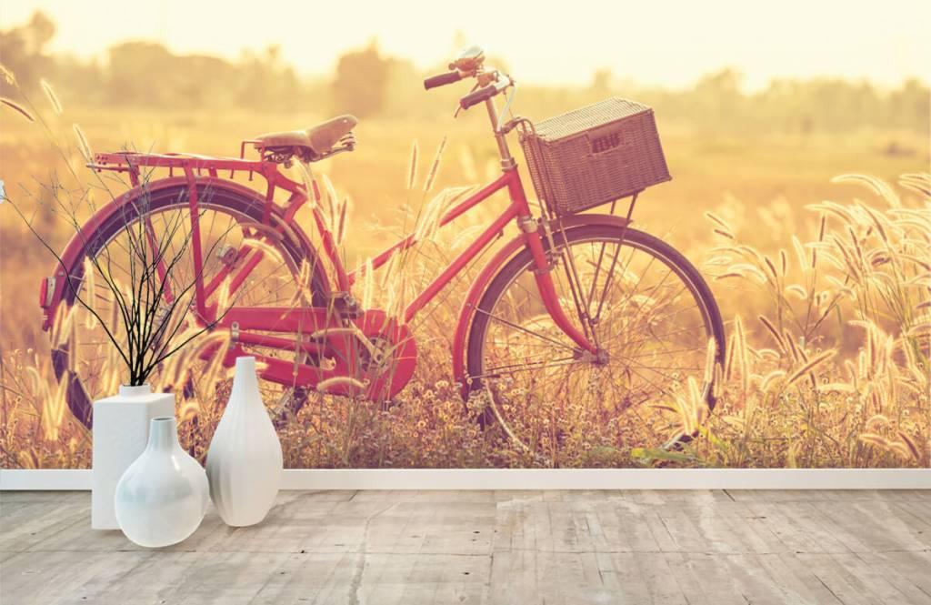 Landskap Vintage cykel 8