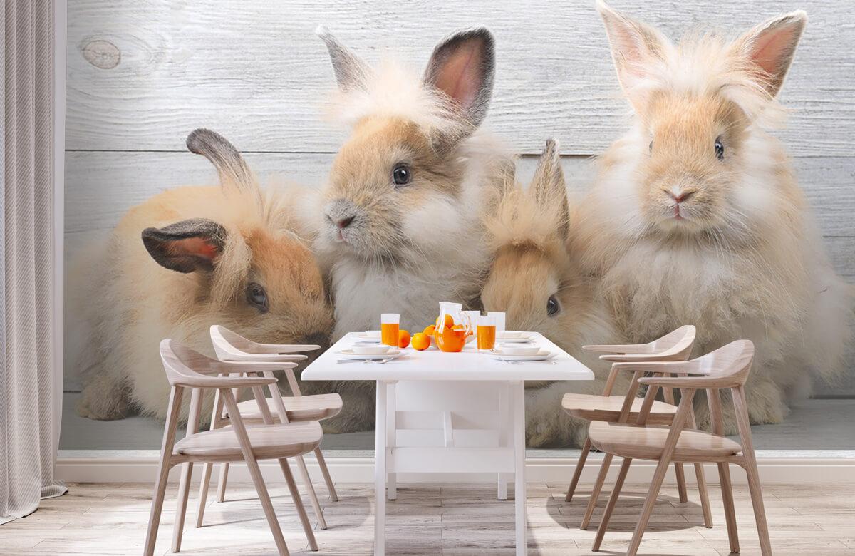 Wallpaper Små kaniner 3
