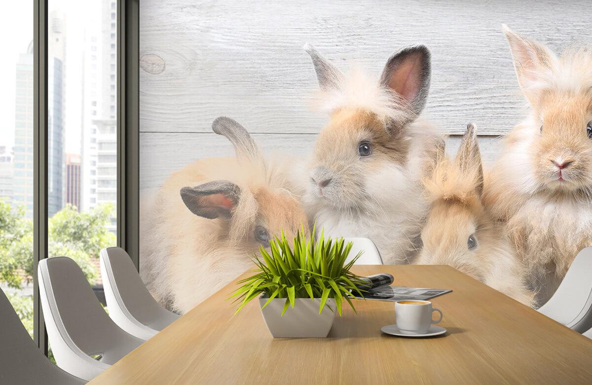 Wallpaper Små kaniner 6