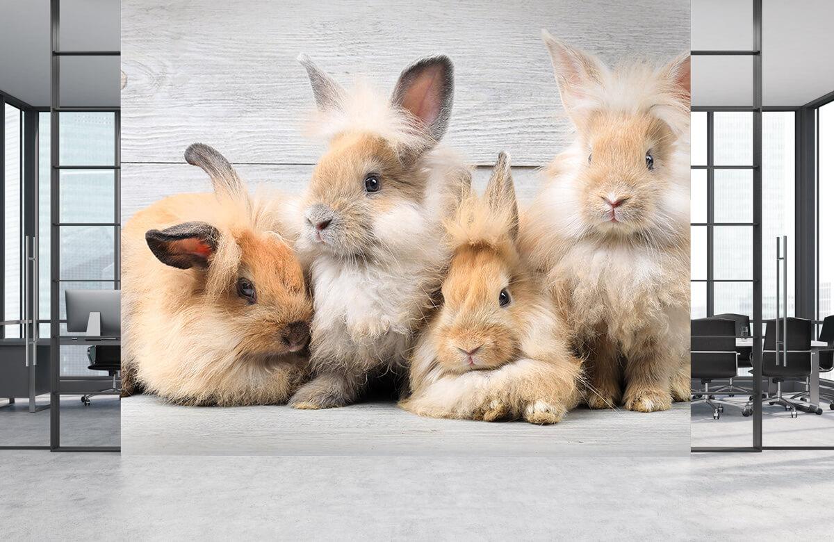 Wallpaper Små kaniner 2