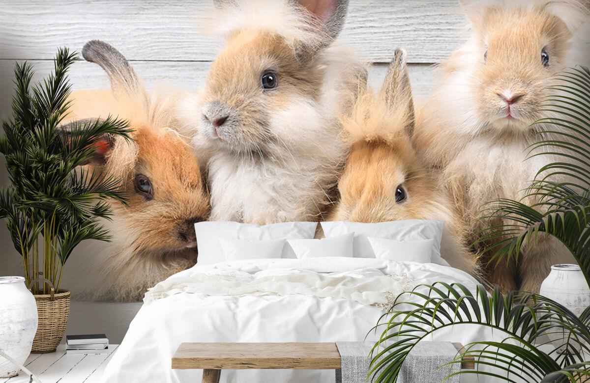 Wallpaper Små kaniner 5