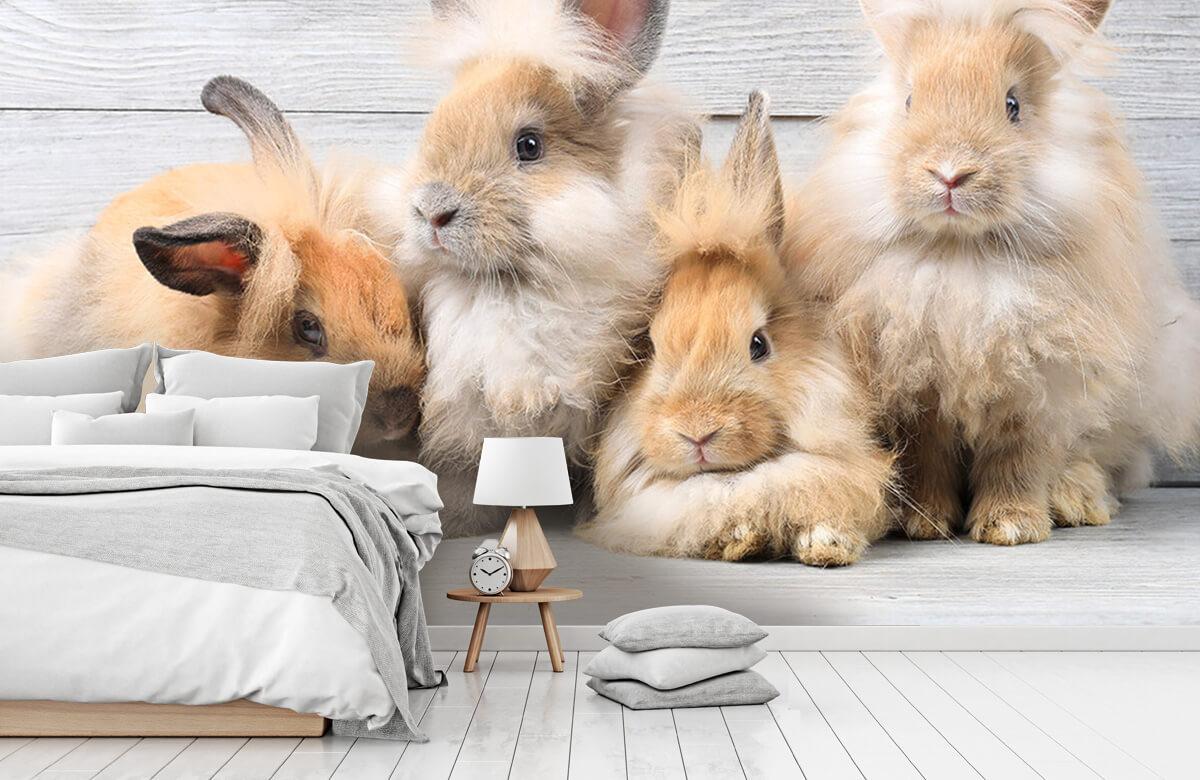 Wallpaper Små kaniner 9