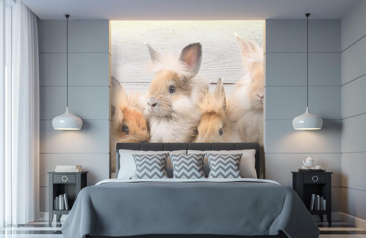 Wallpaper Små kaniner 11