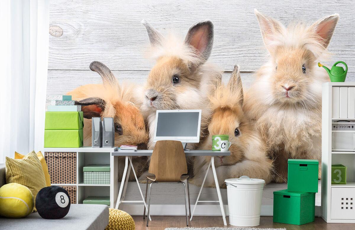 Wallpaper Små kaniner 4