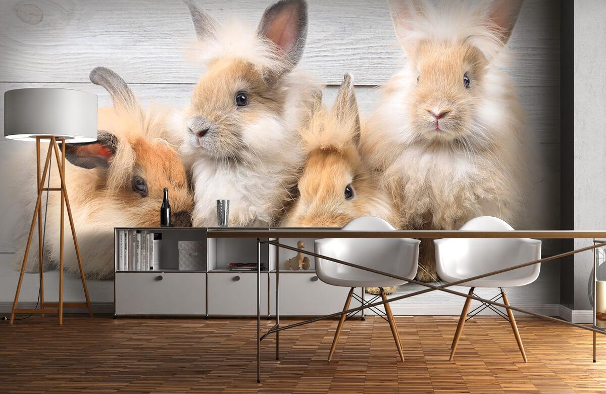 Wallpaper Små kaniner 10