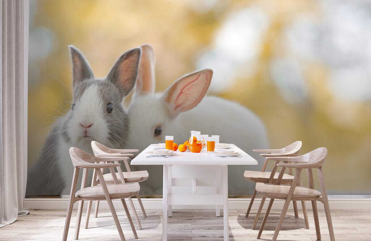 Wallpaper Närbild av kaniner 3
