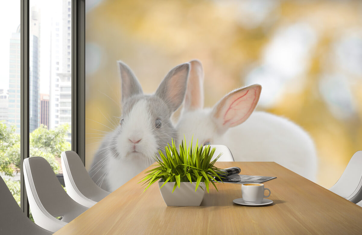 Wallpaper Närbild av kaniner 6