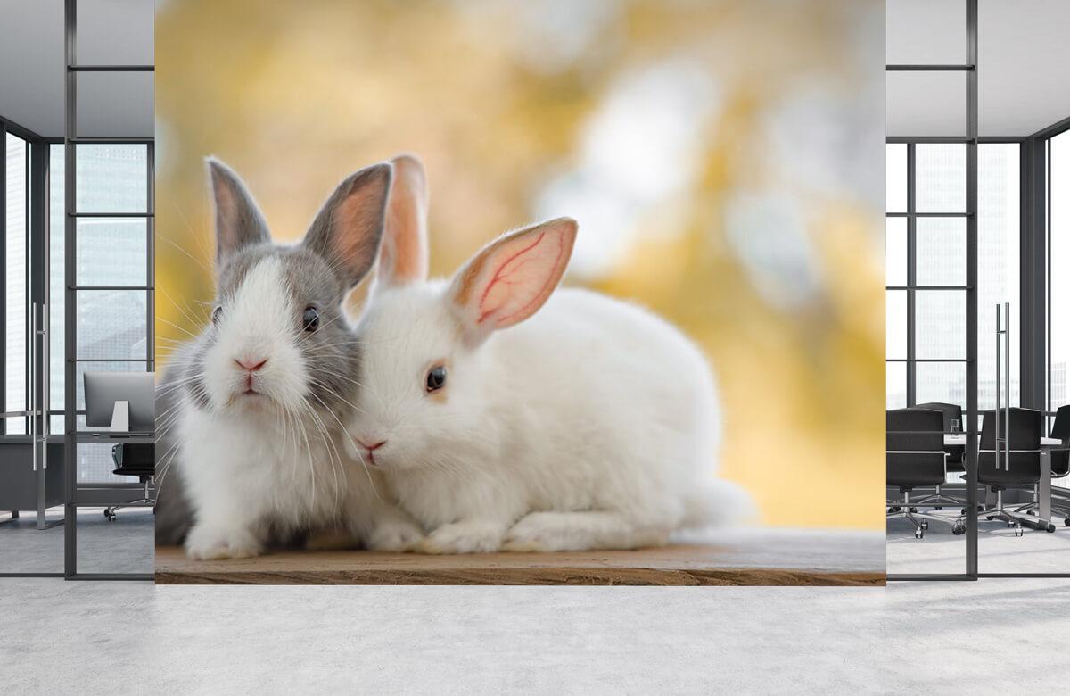 Wallpaper Närbild av kaniner 2
