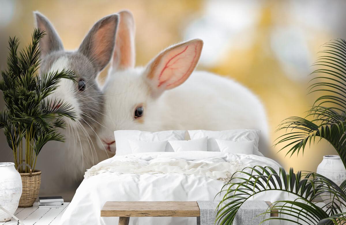 Wallpaper Närbild av kaniner 9