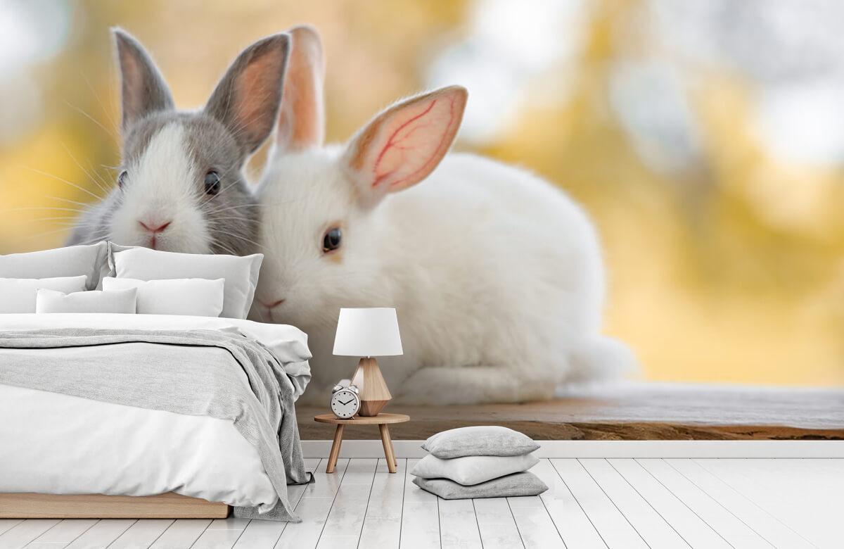 Wallpaper Närbild av kaniner 5