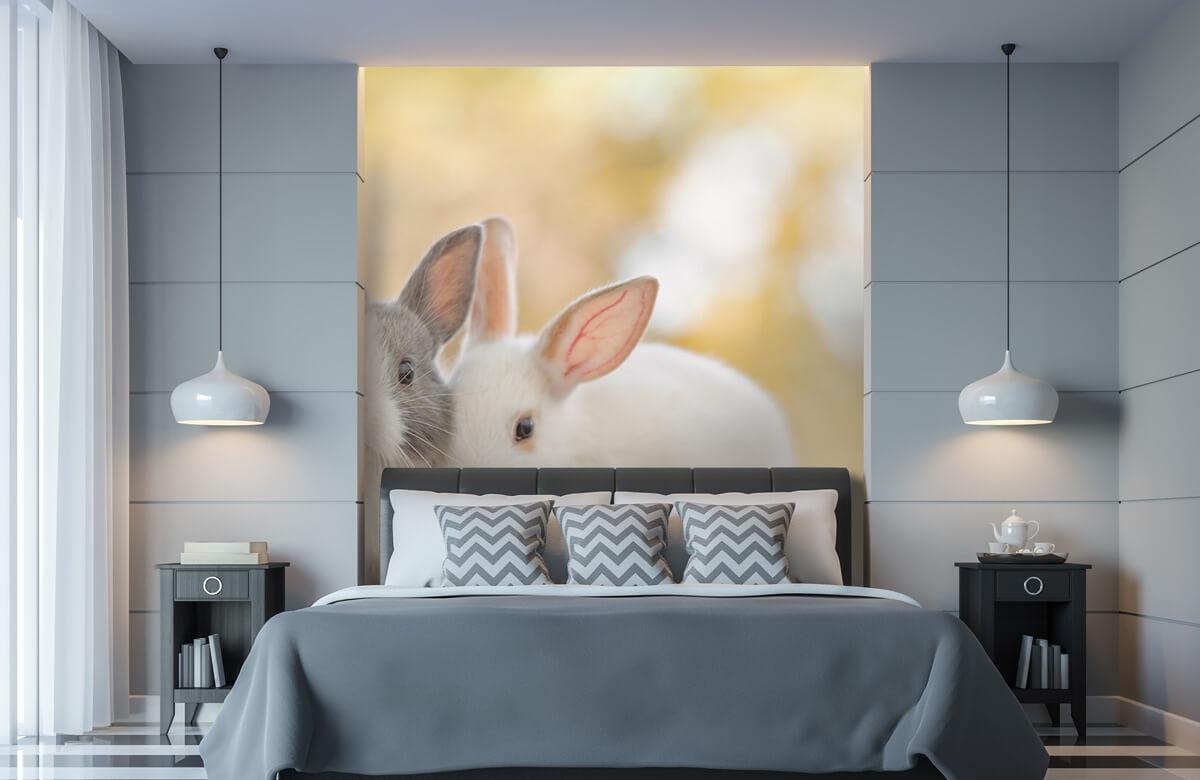 Wallpaper Närbild av kaniner 11