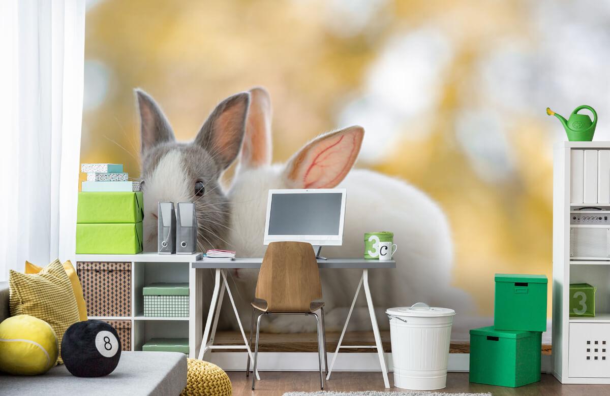 Wallpaper Närbild av kaniner 4