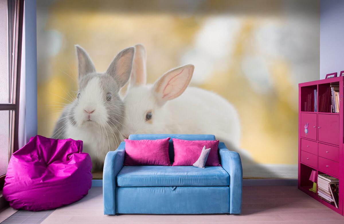 Wallpaper Närbild av kaniner 1