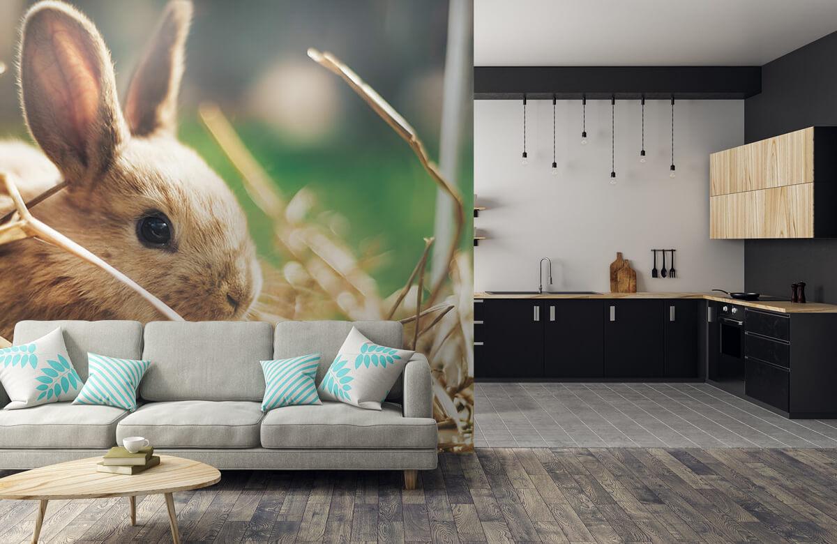 Wallpaper Kanin i halm 10