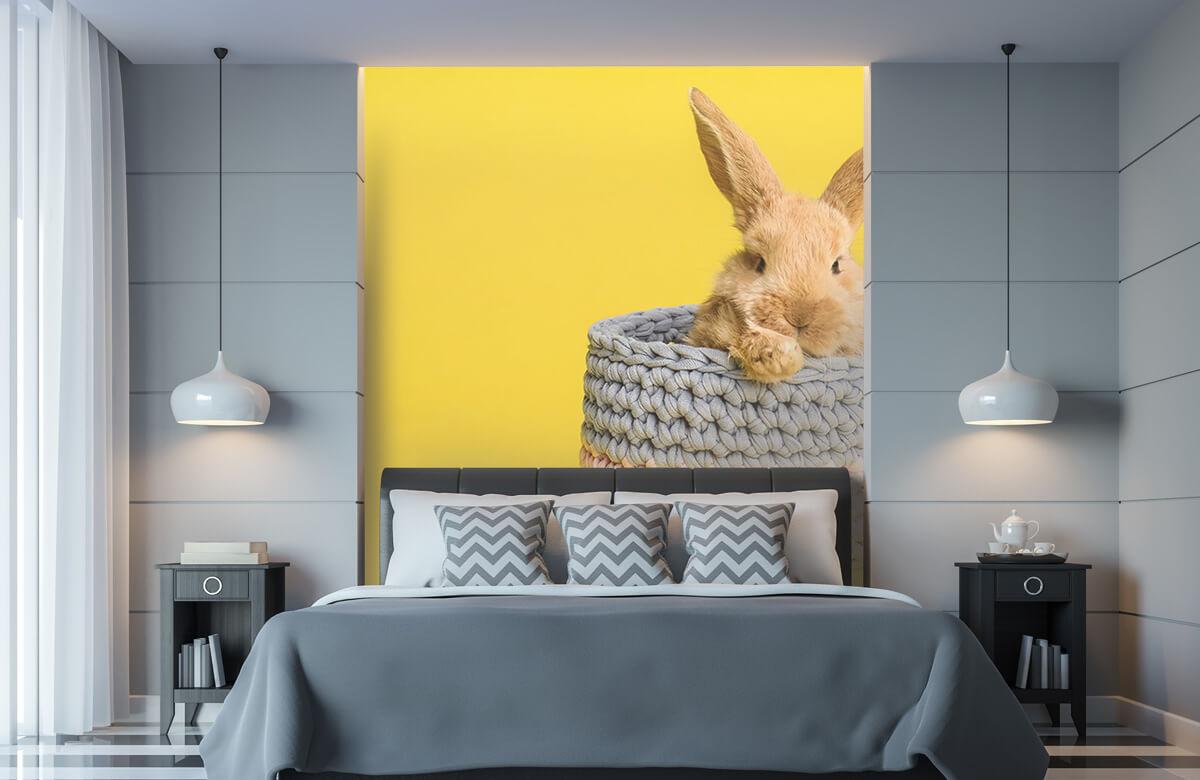 Wallpaper Kanin i korg 11