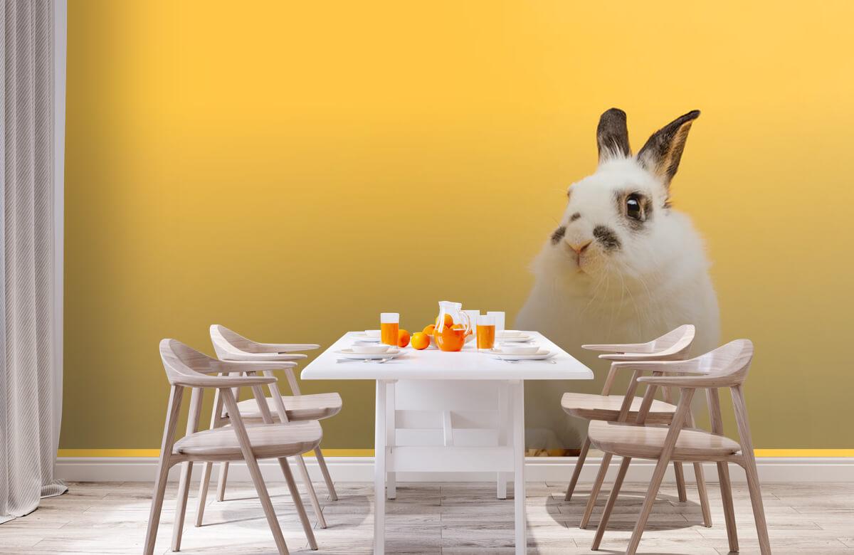 Wallpaper Posering av kanin 2