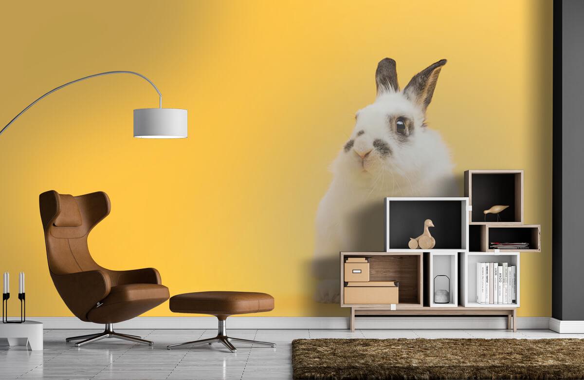 Wallpaper Posering av kanin 9