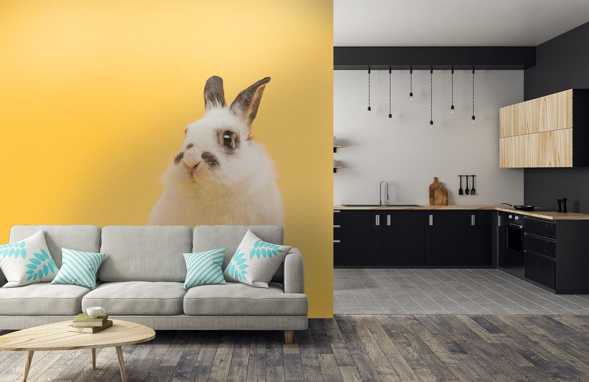 Wallpaper Posering av kanin 10