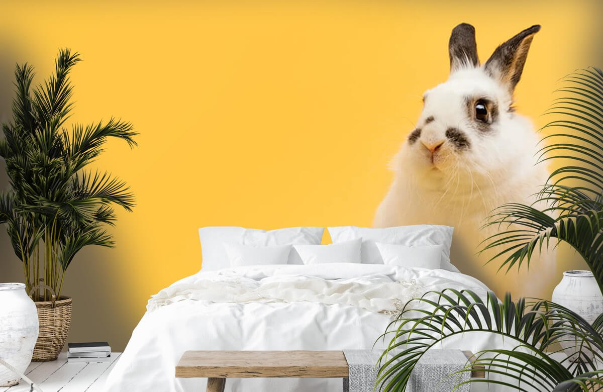 Wallpaper Posering av kanin 8