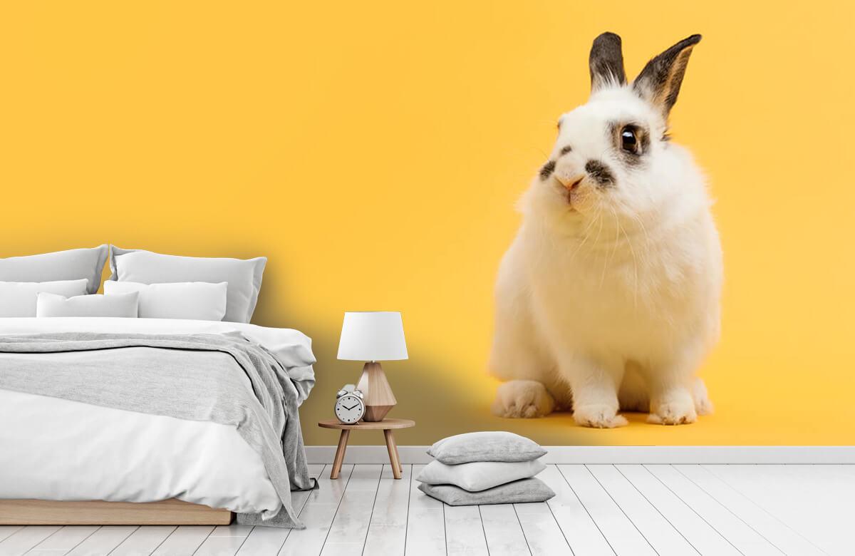Wallpaper Posering av kanin 4