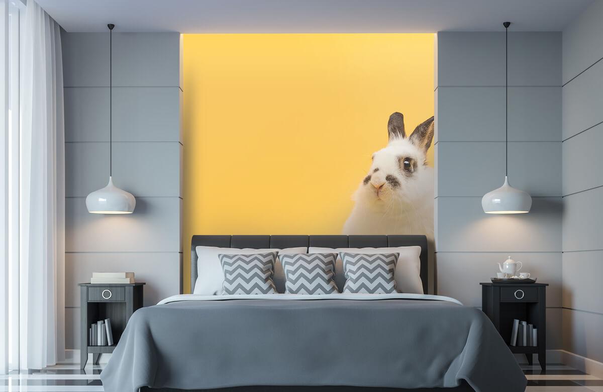 Wallpaper Posering av kanin 11