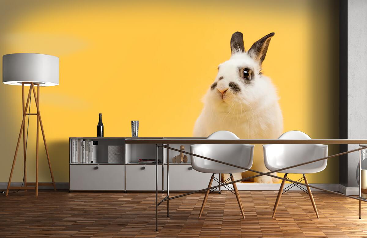 Wallpaper Posering av kanin 3