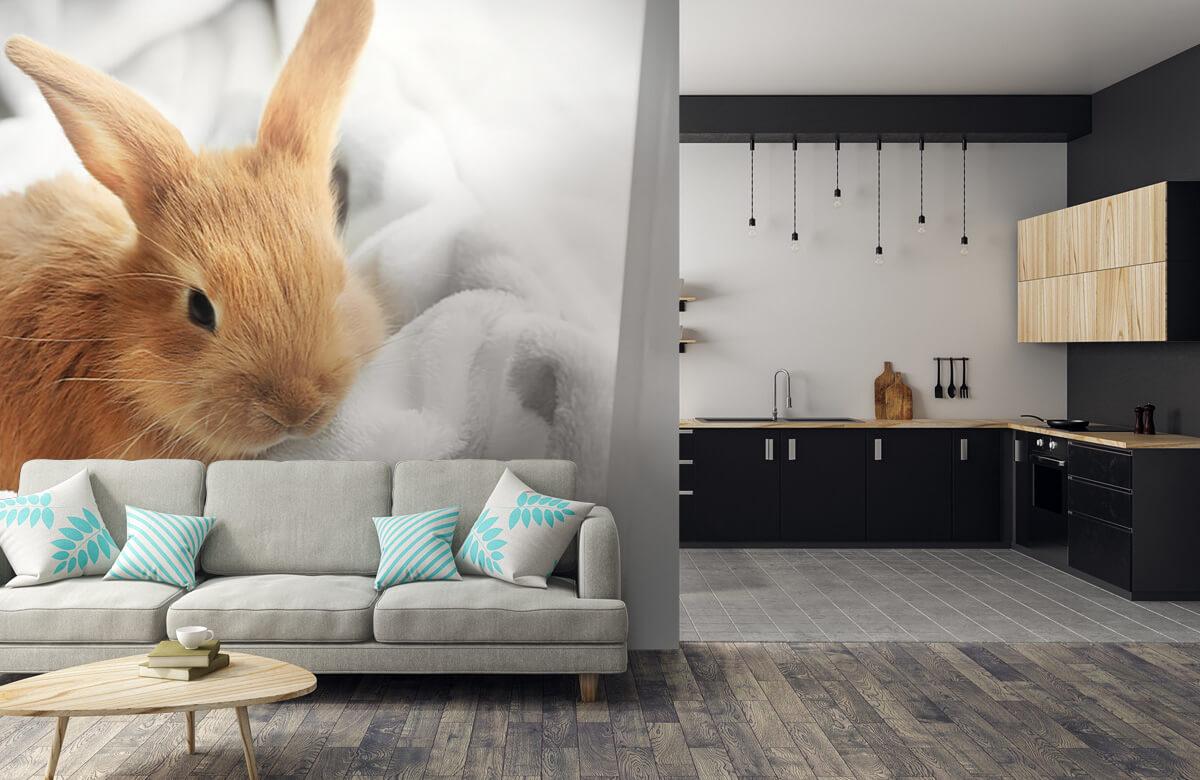 Wallpaper Brun kanin 8