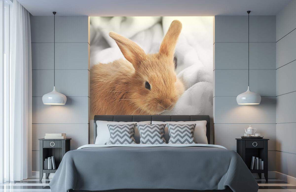 Wallpaper Brun kanin 11