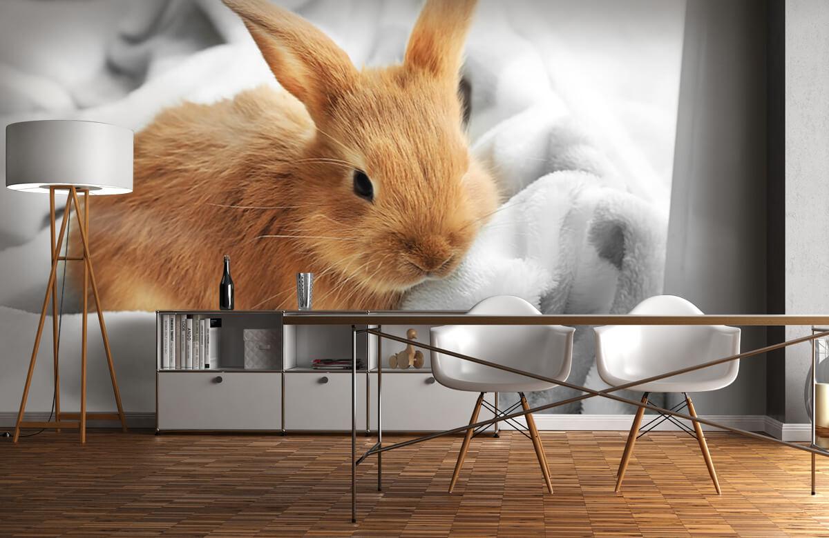Wallpaper Brun kanin 10