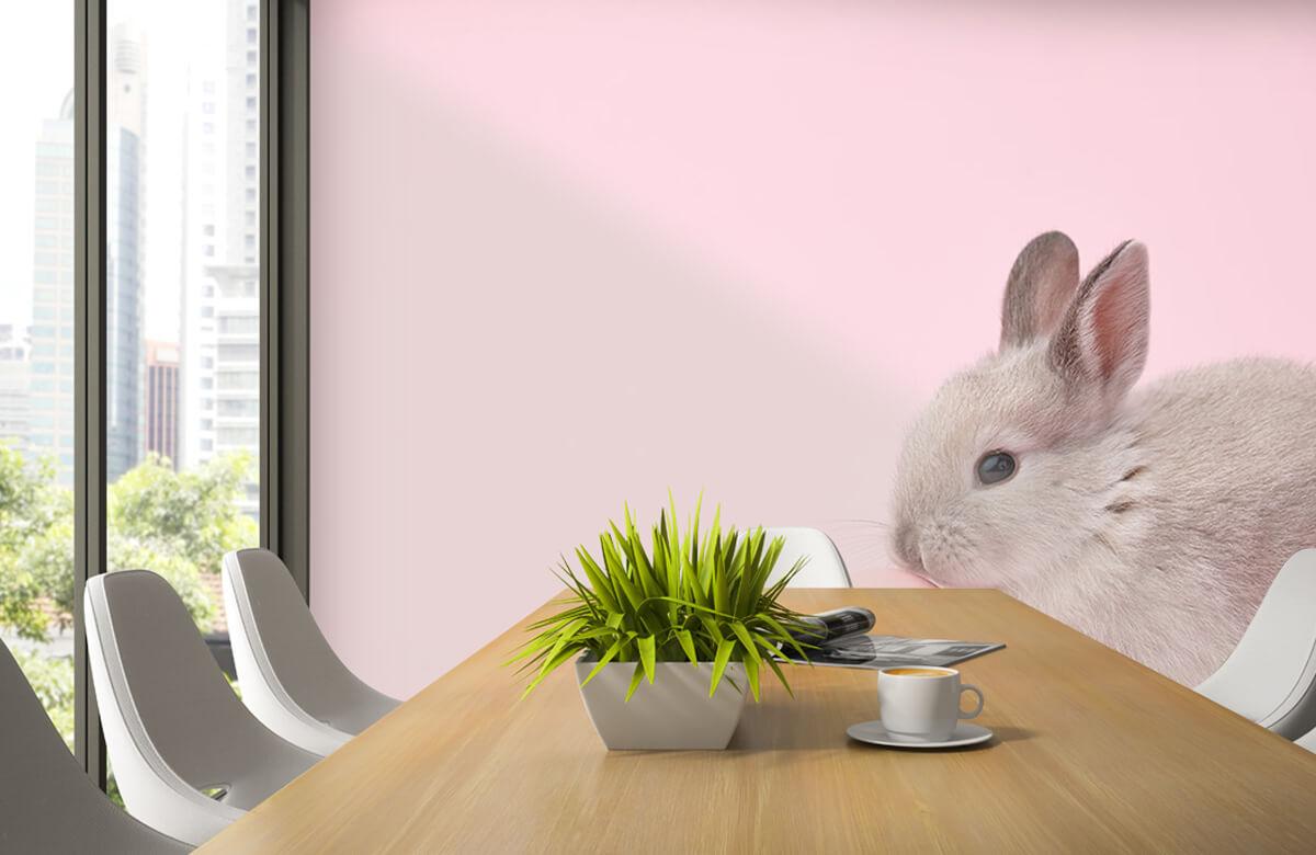 Wallpaper Kanin med ägg 5
