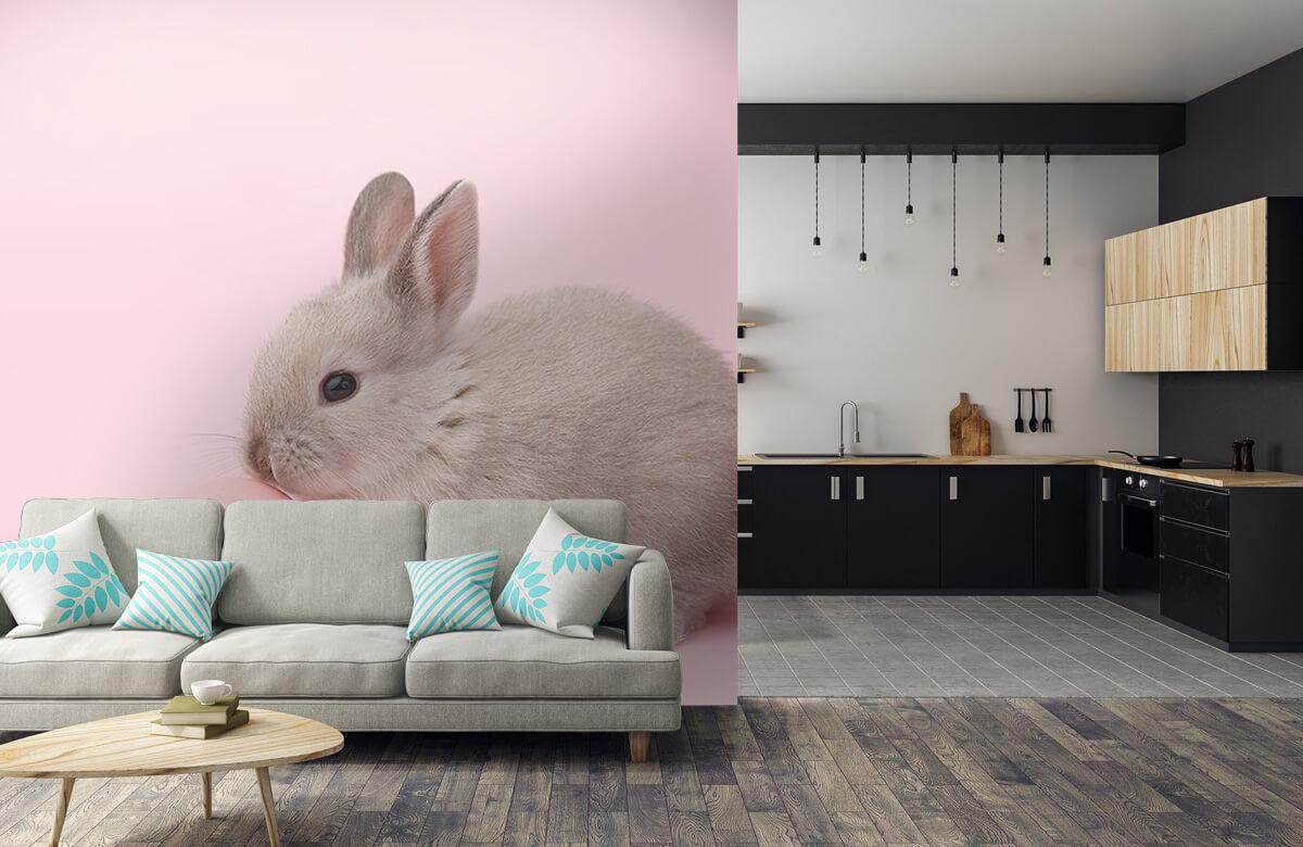 Wallpaper Kanin med ägg 10