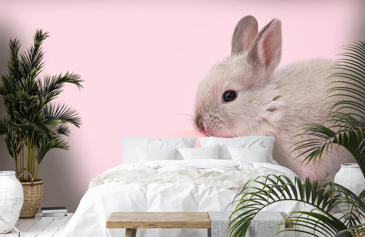 Wallpaper Kanin med ägg 7