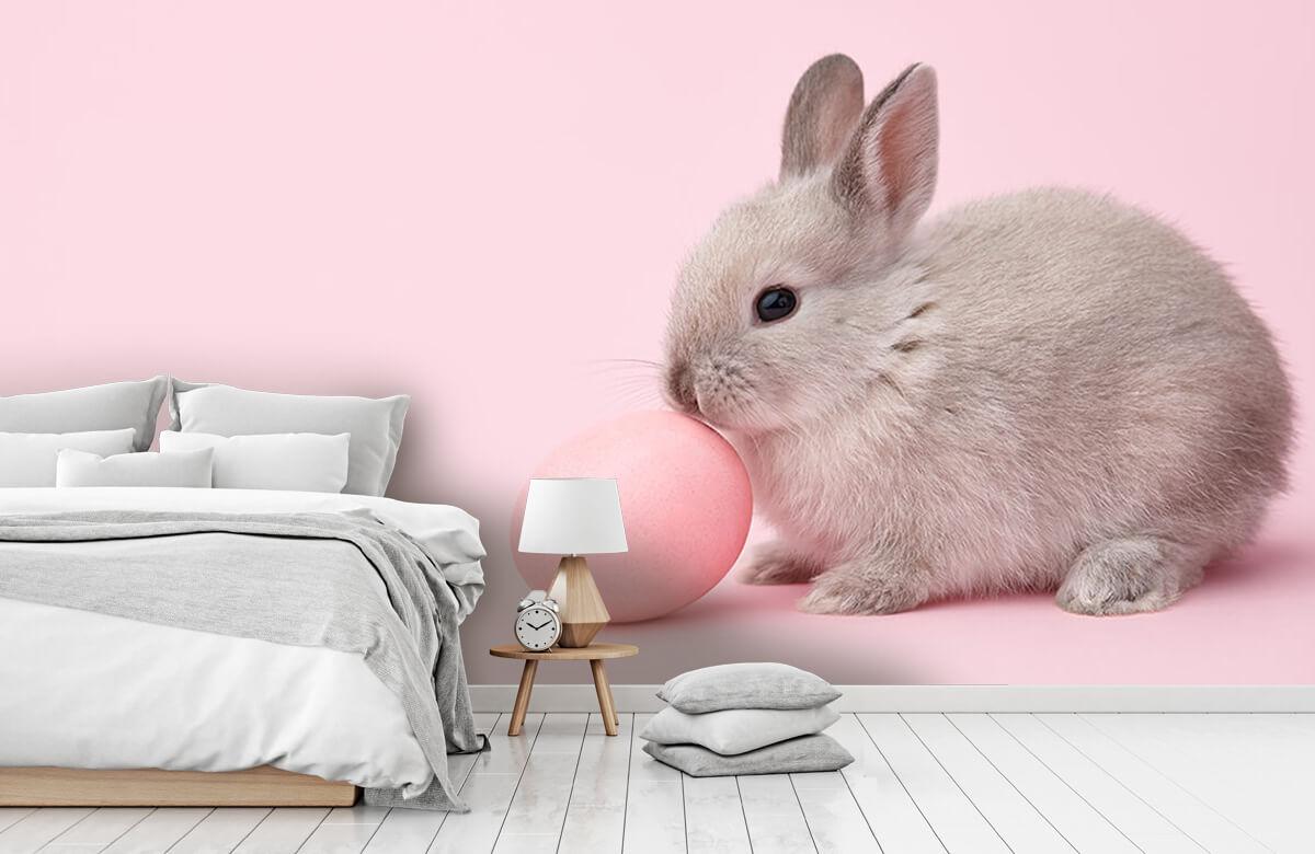 Wallpaper Kanin med ägg 9