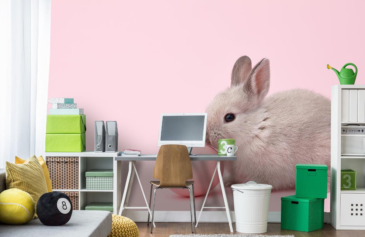 Wallpaper Kanin med ägg 4