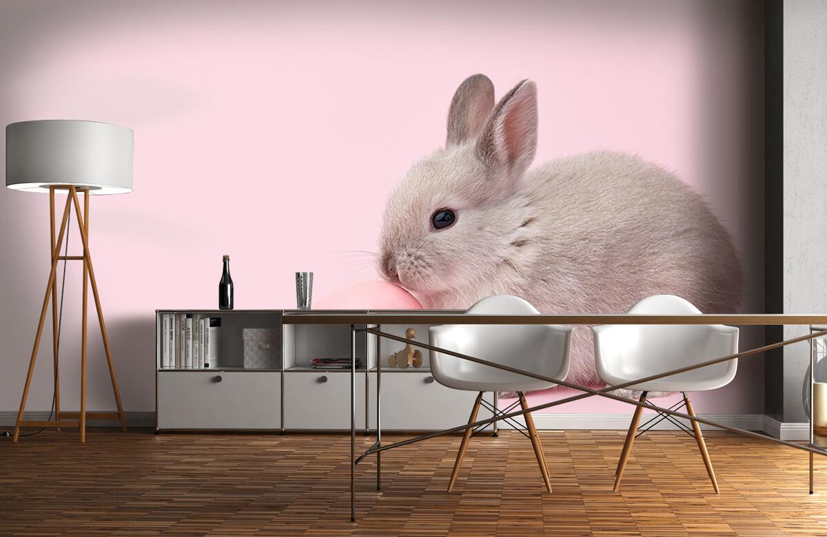 Wallpaper Kanin med ägg 3