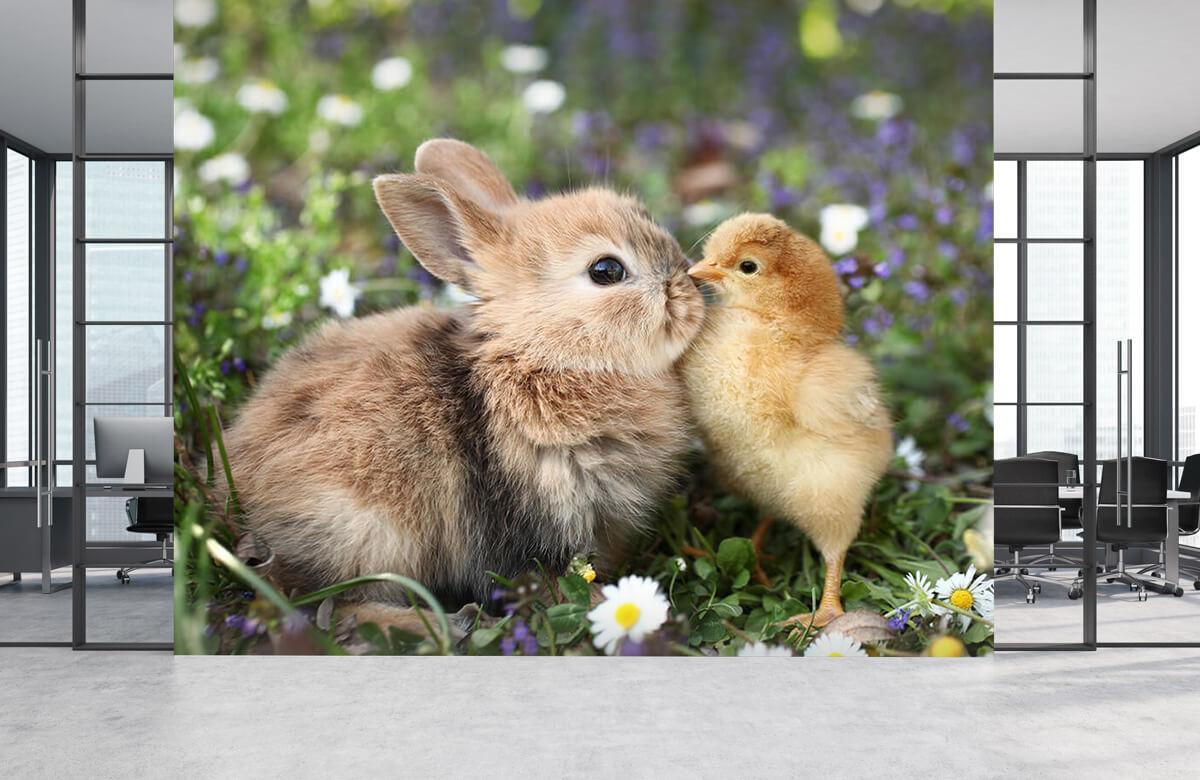 Wallpaper Kanin och kyckling 6