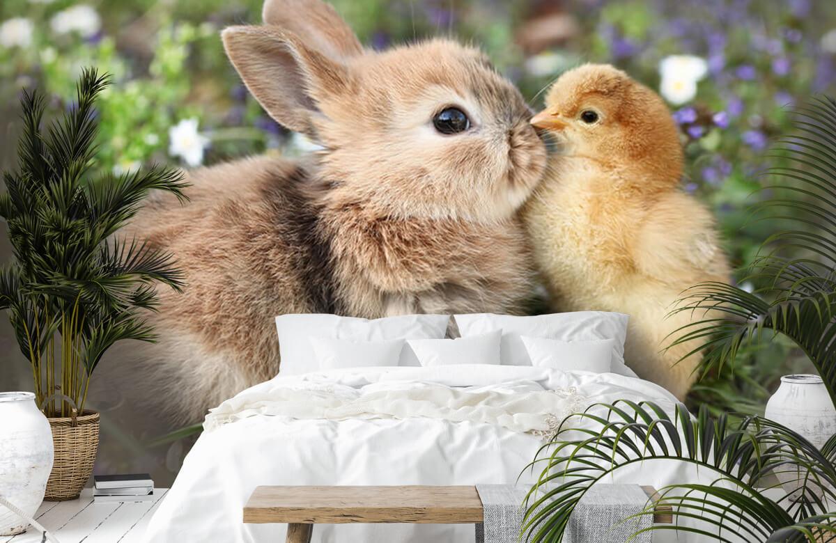 Wallpaper Kanin och kyckling 8