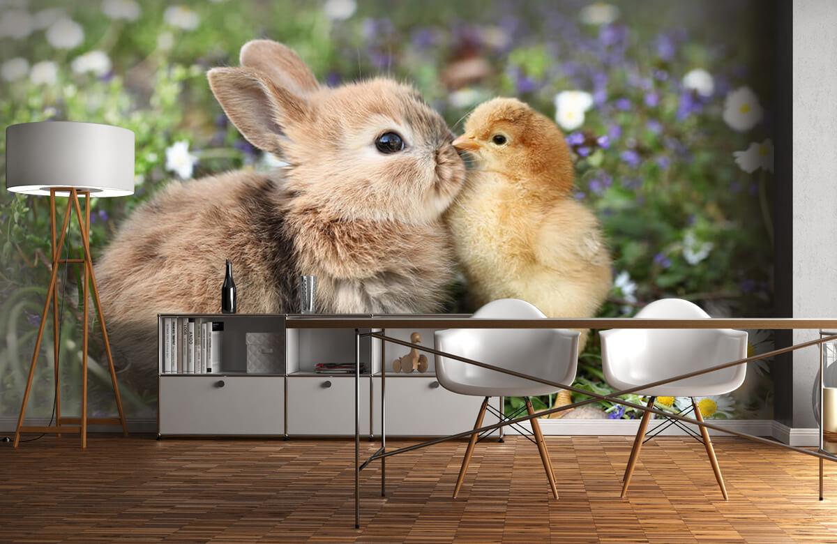 Wallpaper Kanin och kyckling 10