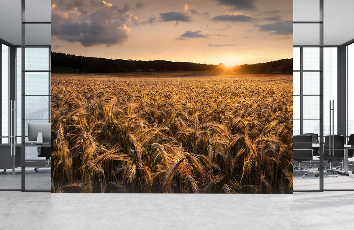Fields of gold 6