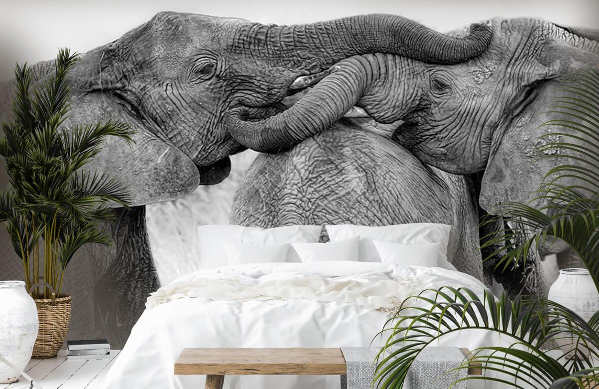 Elephant Playing 6