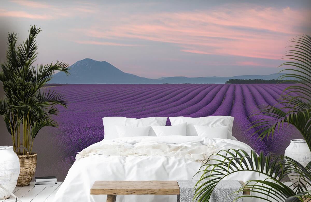 Landscape Lavender field 4