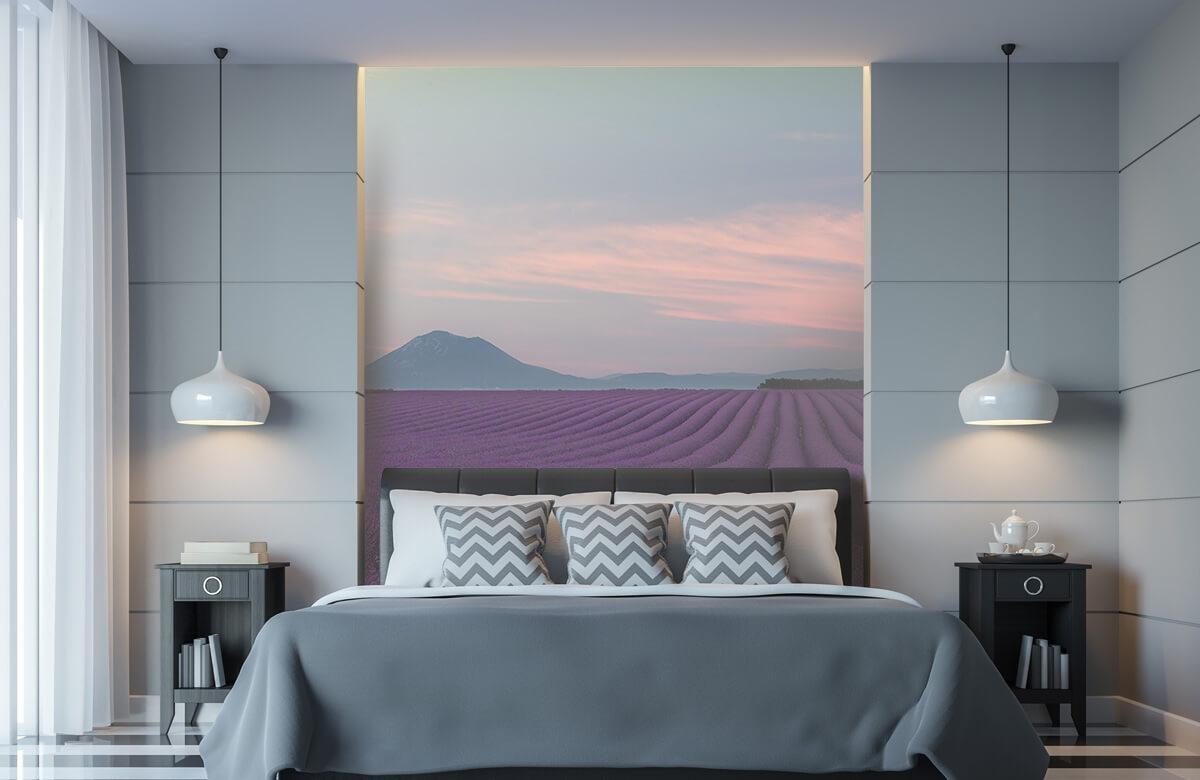 Landscape Lavender field 10