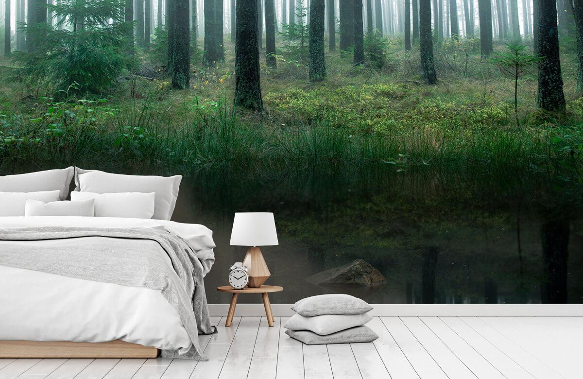 Landscape Lake in forest 11
