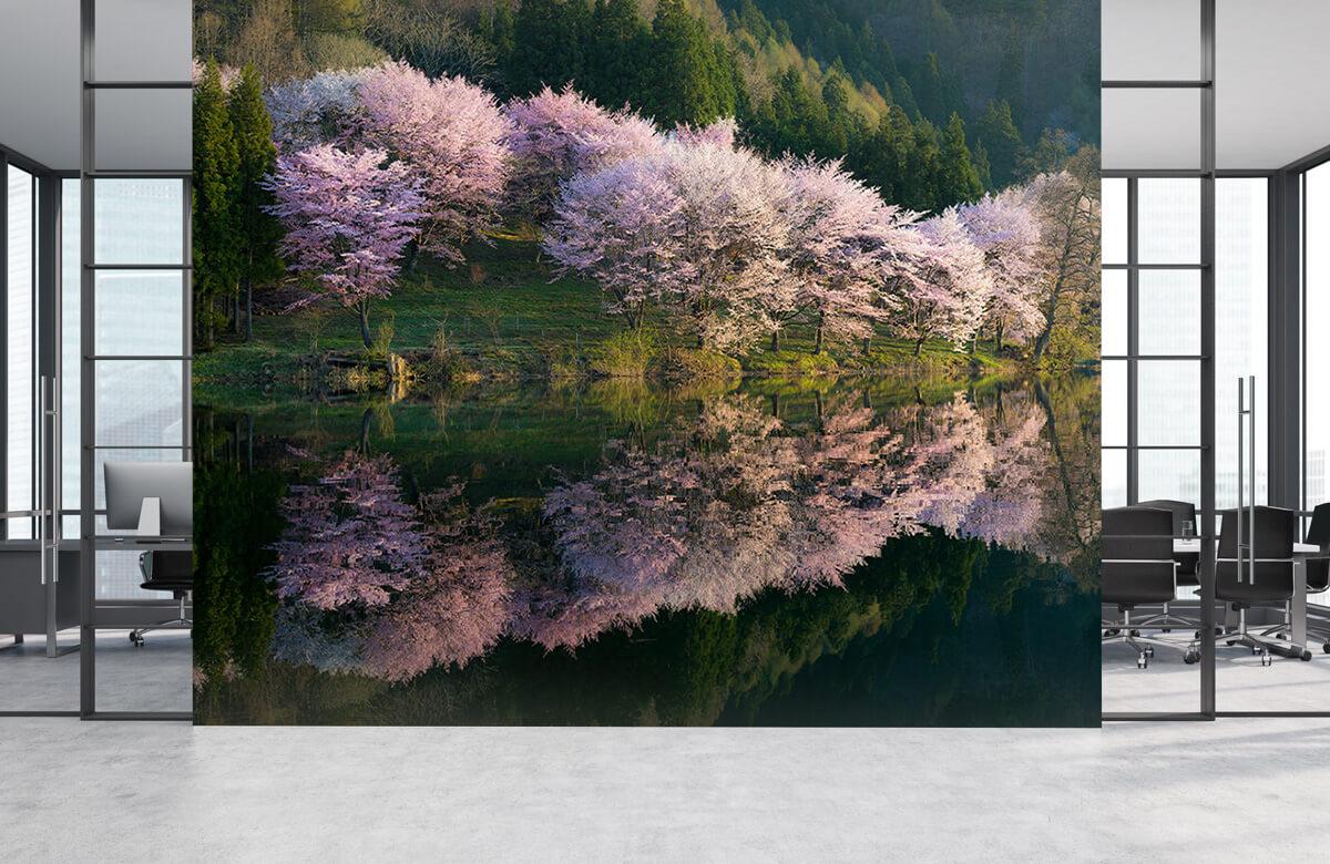 Landscape Sakura 6